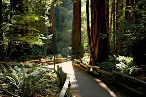 Incredible Adventures - Muir Woods, Napa, and Sonoma Overnight Tour (2 days)